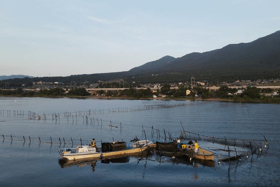 琵琶湖の魞