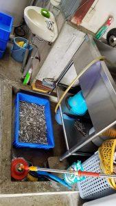 水揚げされた魚を炊く単位で確保します