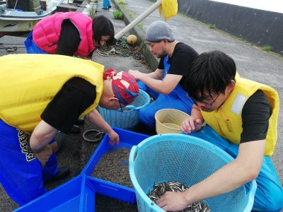 小魚はみんなで漁港で選別します。