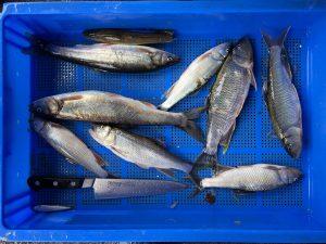 少し大きい魚も持って帰っていただきます。